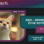 Kedi – sekretne życie kotów – pokaz specjalny