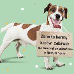 Pomoc na 4 łapy – zbiórka dla podopiecznych Nowosądeckiego Schroniska dla Zwierząt